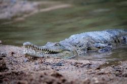 crocs-2