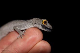 lizards-1